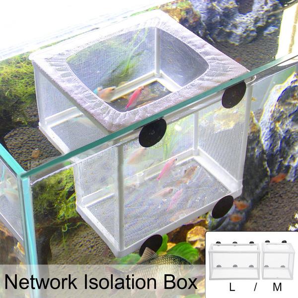 Box, incubator, Tank, guppyfish