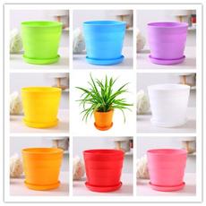 succulent, Plants, Fashion, Home Decor