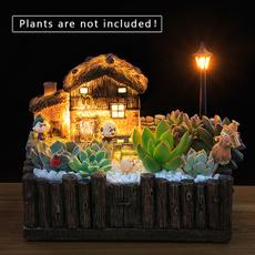 Bonsai, succulent, Decor, Flowers