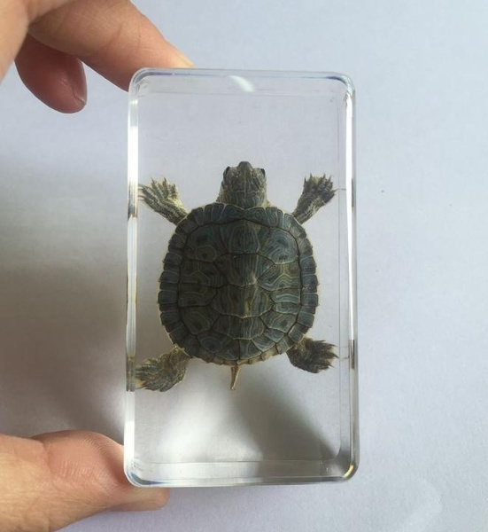 Turtle, giftforchildren, Goth, turtleamber