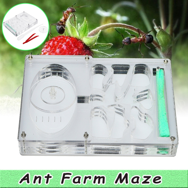 Ants Ant Farm Educational Insect Nest Maze Feeding LIVE Workshop House !