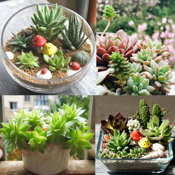 Succulent 100pcs Mix Lithops Pseudotruncatella Bonsai plants Seeds
