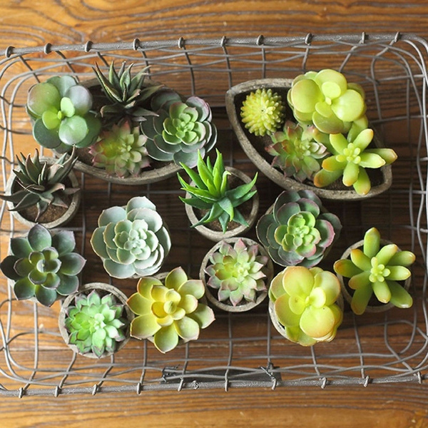 Succulents Plant Garden Decoration