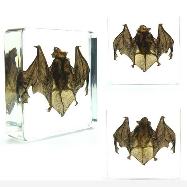 bat Taxidermy Collectio nembedded In Clear Lucite Block Embedding Specimen