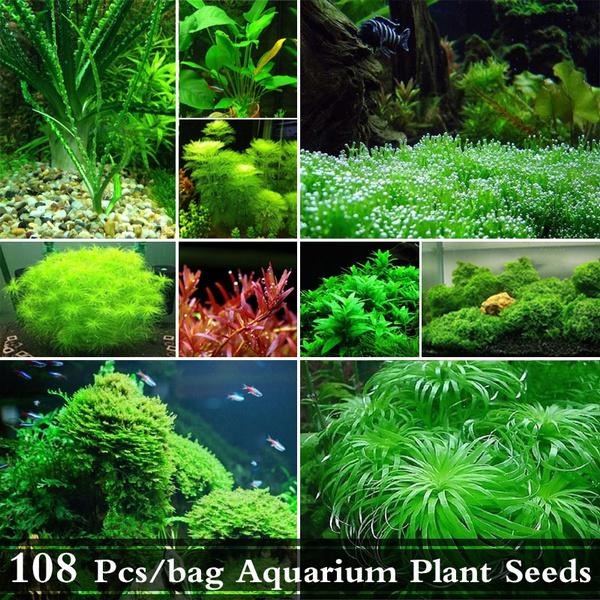 108 Pcs/bag Aquarium Plant Seeds Water Plants Seed