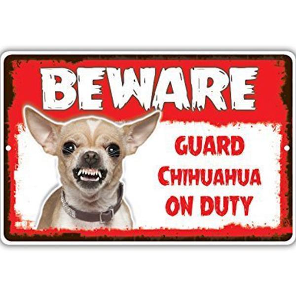 Beware Guard Chihuahua Dog On Duty Yard