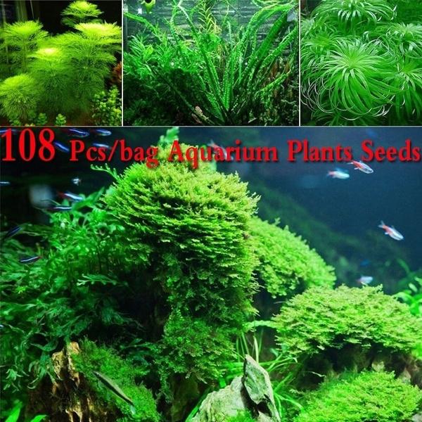 Aquarium Seeds Water Grass Live Plant Fish Tank Decoration Landscape  Ornament
