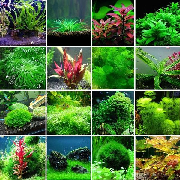 32 Types of Aquatic Plant Seeds Aquarium Plants Live 300Pcs/bag