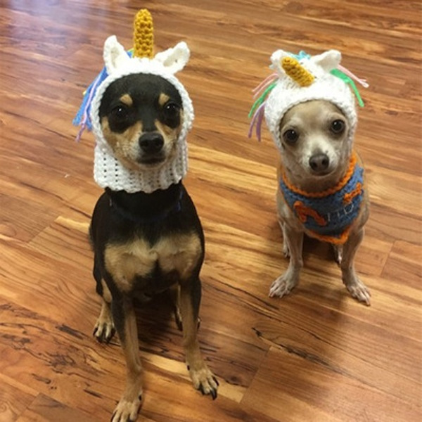 detailed look ccdb6 29cfc The New Cute Unicorn Knitted Hat for Dogs Dog Clothes Dog Stuff