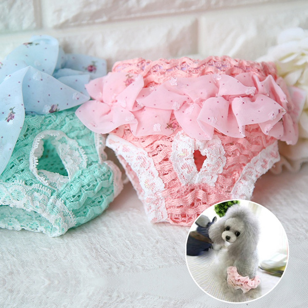 cute, Underwear, puppy, Lace