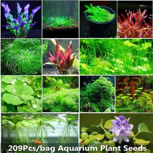 New Fashion 2Pcs Aquariums Fish Tank Plant Seeds