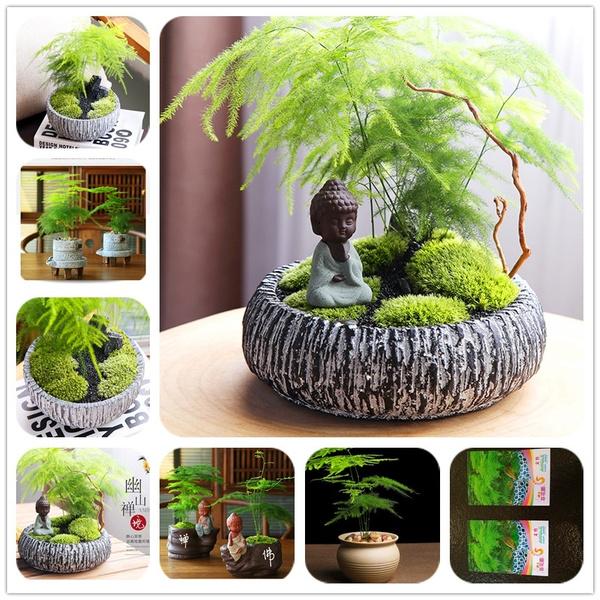 Bonsai, Mini, Plants, Home Decor