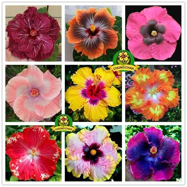 Bonsai, Beautiful, Plants, Flowers