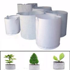 Bonsai, flowerpotsplanter, Plants, Outdoor
