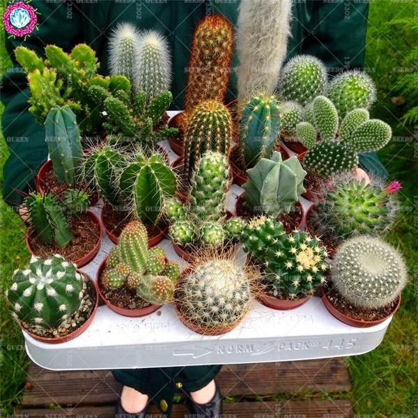 Bonsai, Plants, Garden, Home & Living
