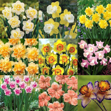 Home Supplies, Flowers, bloomsseed, niceseed