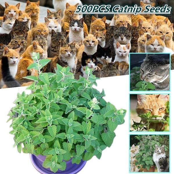 Outdoor, Garden, Pets, plantseed