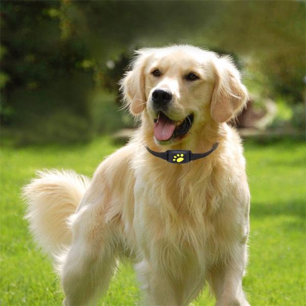 Pet GPS Tracker Collar