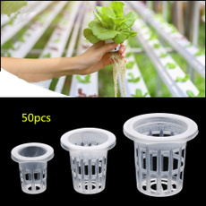 planting, Hot Sell, Flowers, Garden