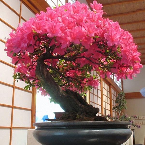 Bonsai, Plants, Flowers, rare