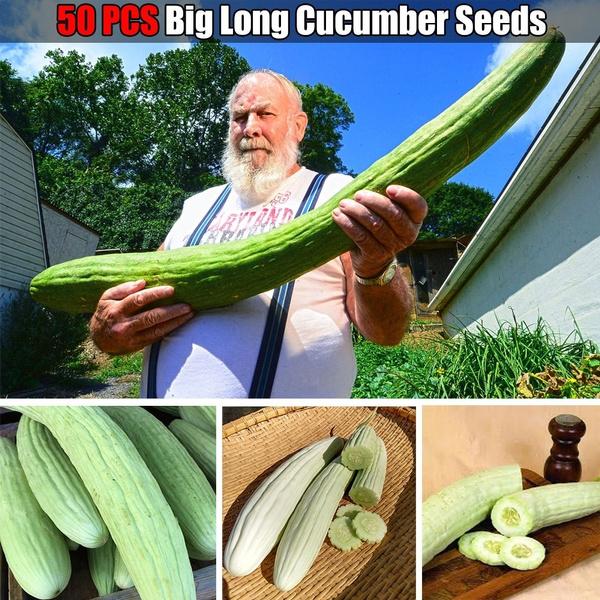 gardenseed, Garden, cucumberseed, seedsforgarden
