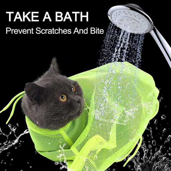 Bath, catshower, Beauty, catbath