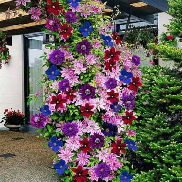 Bonsai, clematisclimbingseed, Flowers, Gardening