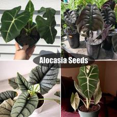 heirloomseed, Bonsai, Plants, Outdoor