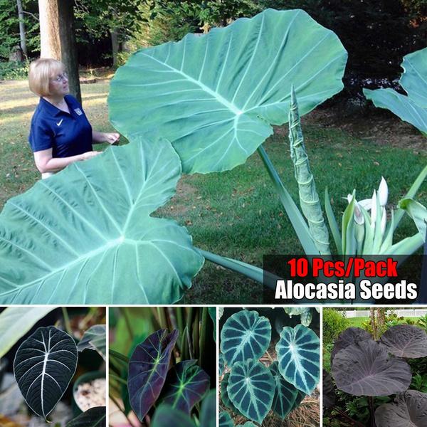 heirloomseed, Decor, Outdoor, outdoorplantsseed