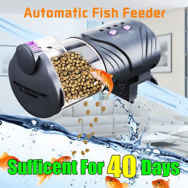 fishfeeding, Tank, fish, fishfeeder