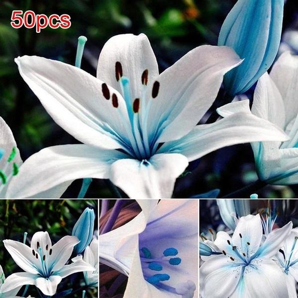 Bonsai, gardenplanting, Decor, Flowers