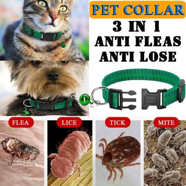 antifleacollar, Pet Supplies, Outdoor, antiflea