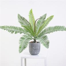 Bonsai, Plantas, Decoración de hogar, Tree