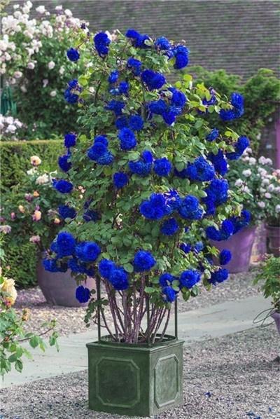Blues, Fashion, Garden, Gifts