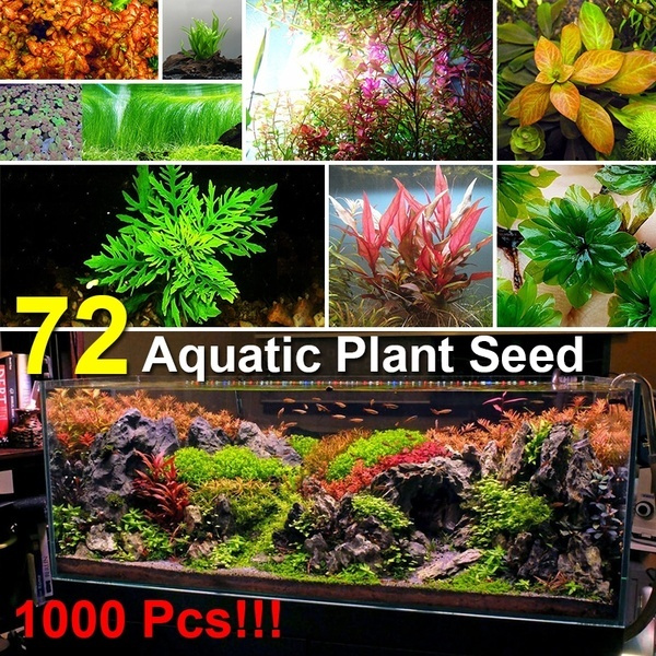 aquaticplantseed, aquariumaccessorie, Plants, Tank