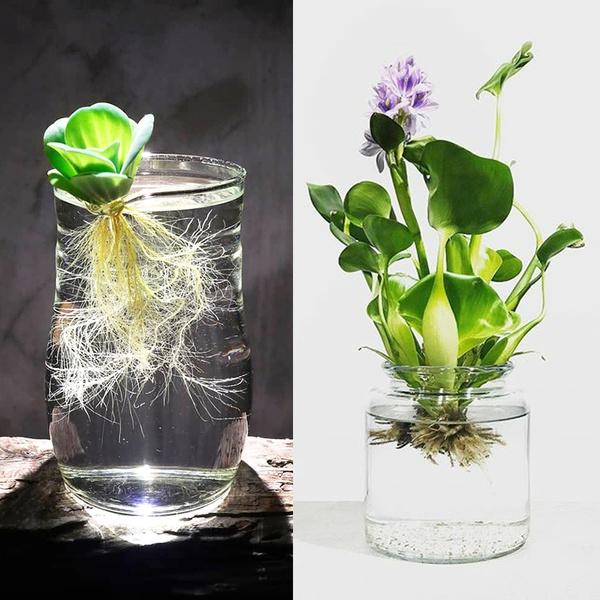 Plants, Grass, leaf, watergra