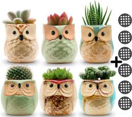succulent, Container, Owl, potssmall