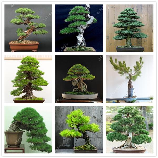 Bonsai, Mini, Plants, Garden