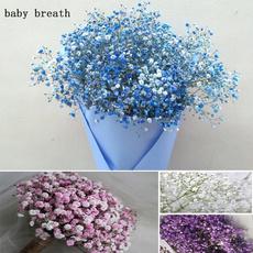 babybreathbonsai, Beautiful, Plants, balconyplant