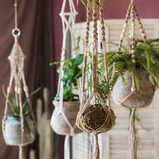 Plantas, Decoración de hogar, Hogar y estilo de vida, planthangingbasket