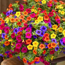 Beautiful, Bonsai, Plants, Flowers