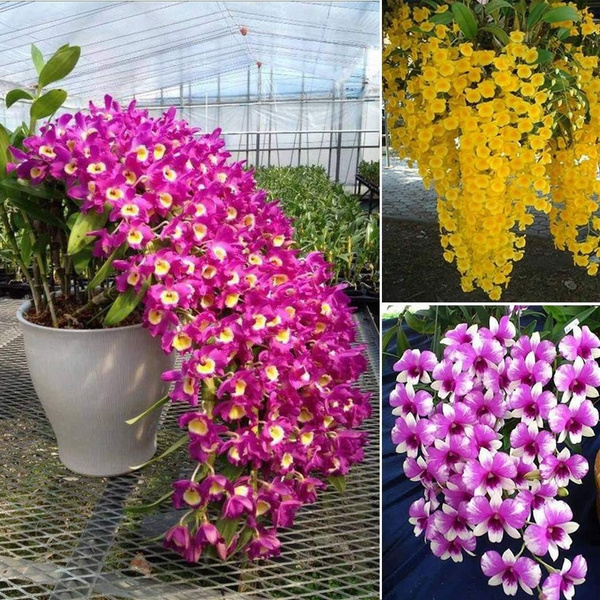 plantsseedsbulb, Flowers, Gardening, perennialseed
