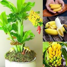 Bonsai, bonsaiplantseed, Plants, Outdoor