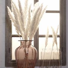 phragmite, Plants, pampasgras, Natural