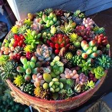 Bonsai, Mini, flowersampplant, Flowers
