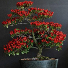 Bonsai, Plants, Garden, gardensupplie