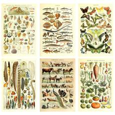 Science, Decor, Wall Art, Mushroom