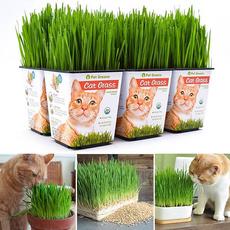 cattoy, wheatseed, wheat, Survival