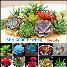 Bonsai, smallsucculentplanter, Flowers, raresucculent