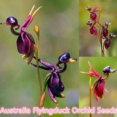 Flowers, artificialplant, Garden, flyingduckorchid